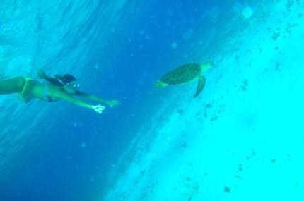 location catamaran croisière Grenadines